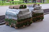 Rolls Of A Natural Lawn With The Earth Stack On Pallets In A Stack And Are Covered With A Film On Th poster