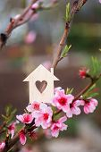 Closeup Wooden House With Hole In Form Of Heart Surrounded By Pink Flowering Branches Of Peach Trees poster