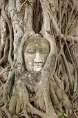 Buddha And Roots