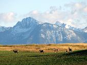 Montana Scenery And Wildlife