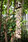 Home Garden Blinds Made By Various Shell