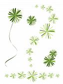 Beautiful Foxtail Fern Leaves On White Background