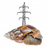 Huge snail with pylon on shell isolated on white background