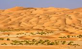 Empty Quarter Wadi