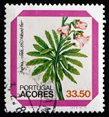 Postage Stamp Portugal 1982 Azores Bellflower, Dwarf Shrub