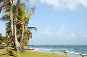 Undeveloped Sally Peach Beach Palm Trees  Caribbean Sea With Native Building Big Corn Island Nicarag
