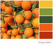 A background of fresh oranges on a market stall, in a colour palette with complimentary colour swatches.
