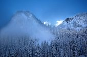 Fog Snow Covered Mountain Evergreen Trees At Snoqualme Pass Washington