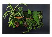 Contemporary moss wall planter.