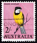 Postage Stamp Australia 1963 Golden Whistler, Bird