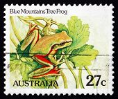 Postage Stamp Australia 1981 Blue Mountains Tree Frog, Amphibian