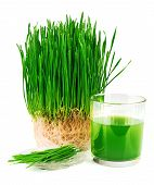 Wheatgrass Juice With Sprouted Wheat On The Plate
