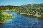 image of wander  - Wandering river between green plants in outdoor park - JPG