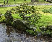 Fragment Of A Japanese Garden With A Bonsai Tree Growing On A Bank Of The Stream.