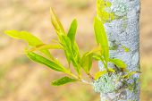 foto of afforestation  - Young green tree seedling grow from the old - JPG