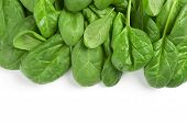 Fresh Green Leaves Spinach