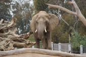 Elephant Odyssey Exhibit