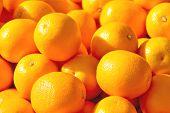 Sale Of Ripe Oranges On The Market
