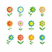 flowers vector design