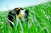 A Cute Dog In The Grass