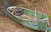 Green hunters boat in a reed