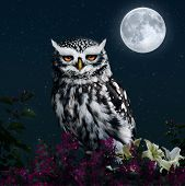 the owl and the moon.