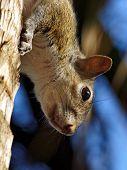 Extreme Closeup Squirrel