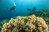 Scuba divers exploring coral reef in ocean