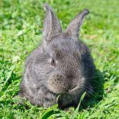 Little Rabbit On Green Grass Background