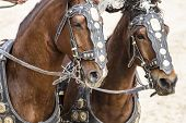 picture of charioteer  - Horses - JPG