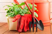 Garden Tools With Plants On Wood Background