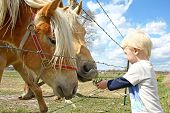 stock photo of feeding horse  - a very young child is standing by a farm fence in the country feeding grass to two horses - JPG
