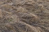 Dry Grass Background