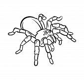 Tarantula tattoo