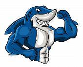 Shark Muscle