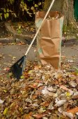 Bagging Fall Leaves