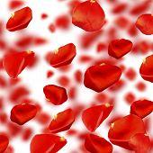 Falling rose petals close-up