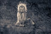 Fashion shot of a beautiful girl in style of the American Indians. Western style. Jeans fashion. Toned photo.