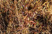 Beautiful wildflowers in field
