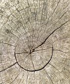 Old weathered tree stump ideal for backgrounds and textures
