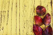 Dark red leaves on yellow wooden background