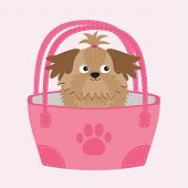Little Glamour Tan Shih Tzu Dog In The Bag.