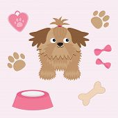 Little Glamour Tan Shih Tzu And Dog Stuff.