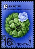 Vintage  Postage Stamp. Expo 74. Rose.