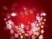 autumn leaves - nature background