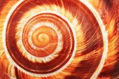 Snail Shell Background