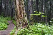 Winner Creek Trail 1