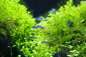 Aquatic Plants In Tropical