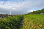 Waving reed along a plowed field at fall