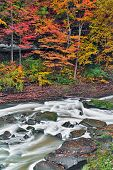 Autumn Rapids